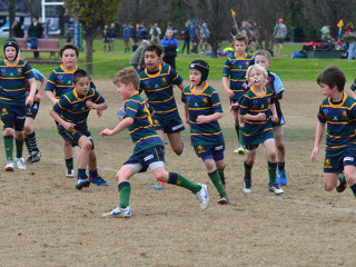 Junior Rugby increases in Victoria Melbourne Rugby Club